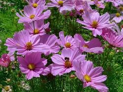 Цветы на руинах - Юдичева Нина